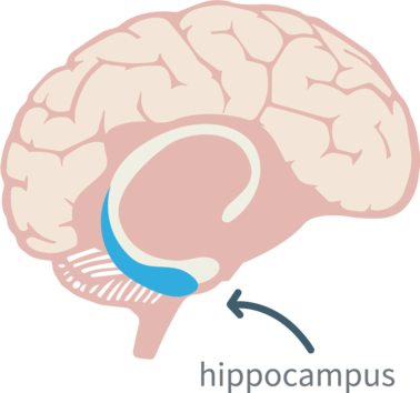 hippocampus-dementia-guide.png